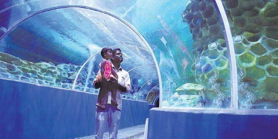 VGP brings exotic marine life on land